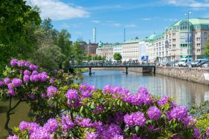 Canal in central Gothenburg. Focus is on blooming Rhododendron.